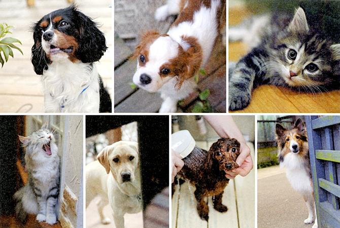 Dog & Cat Reform